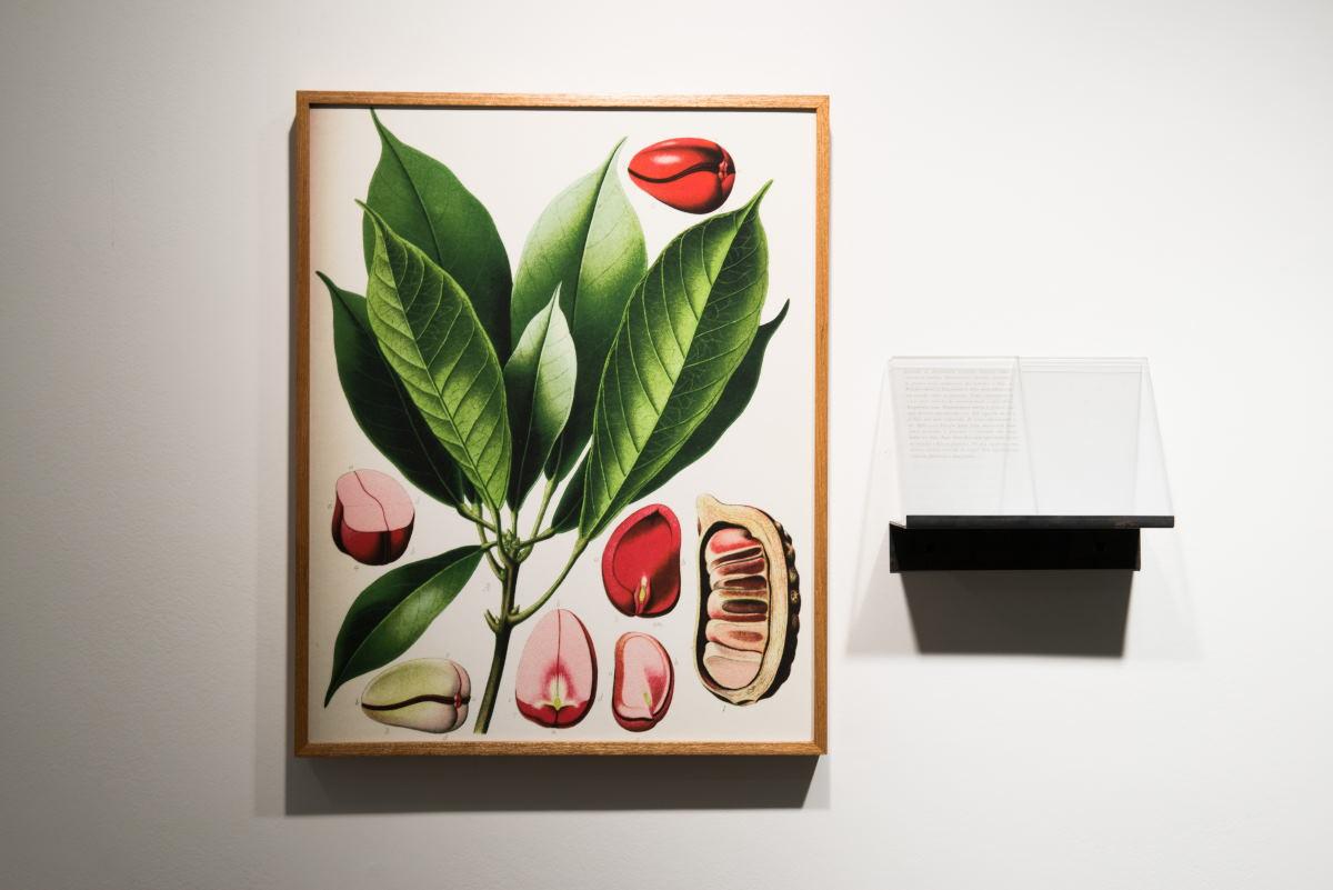 Ivan Grilo abre exposição na Luciana Caravello