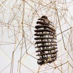 Anita Schwartz Galeria de Arte inaugura exposição da artista Daisy Xavier