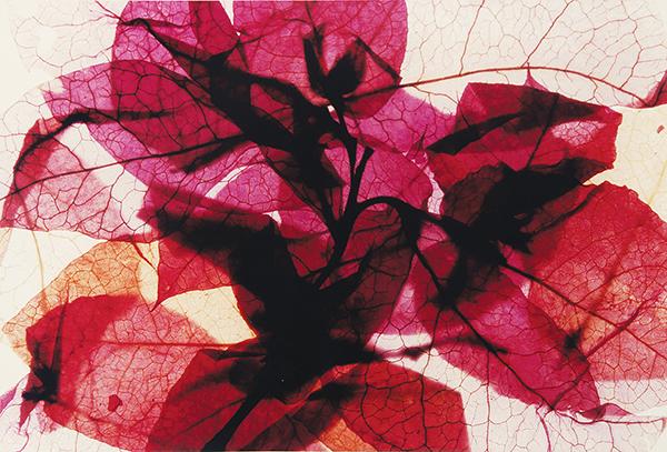 Gilda Goulart comemora 50 anos de carreira com individual A Arte em 2 Segmentos