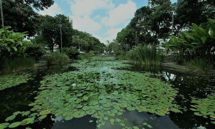 Recife: Prefeitura promove Seminário Internacional em homenagem ao paisagista Burle Marx